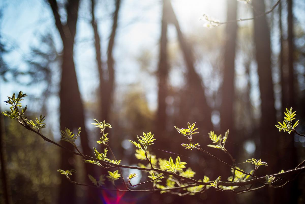 Святкові дати в квітні 2021 року / фото ua.depositphotos.com