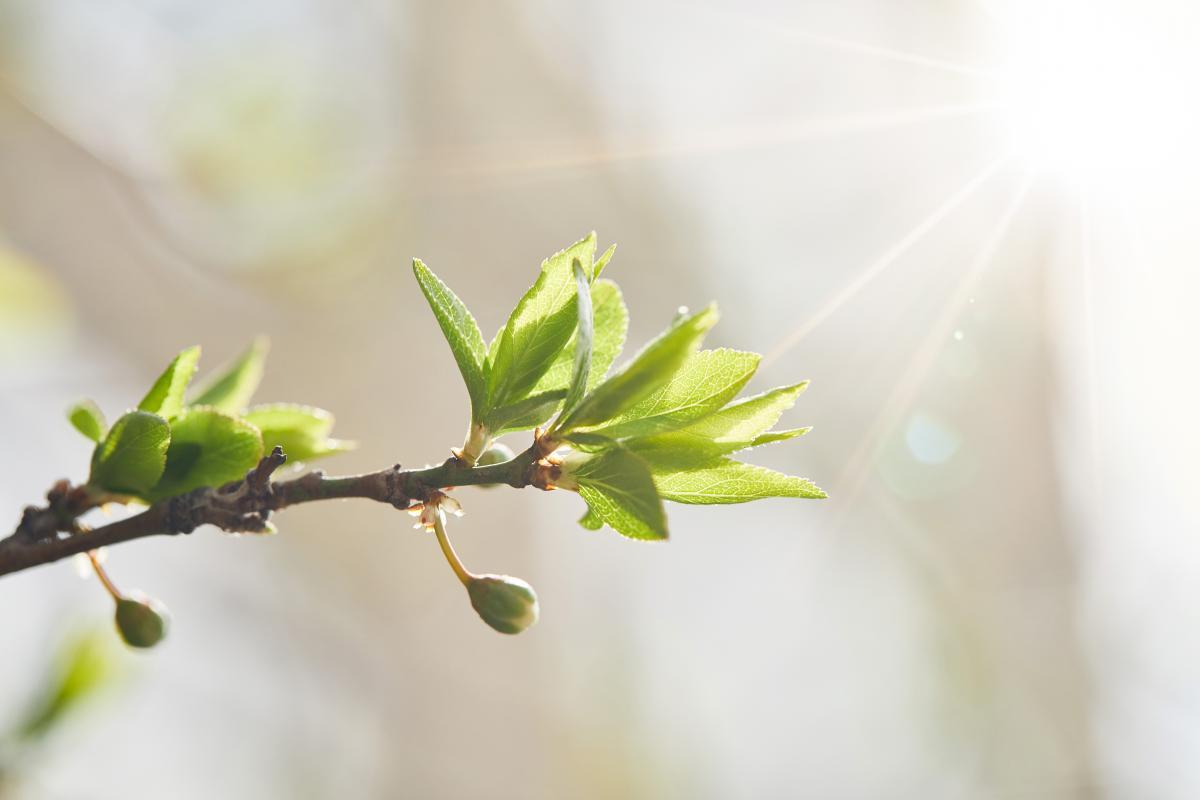 Сегодня в Украине будет солнечно и тепло / Фото ua.depositphotos.com