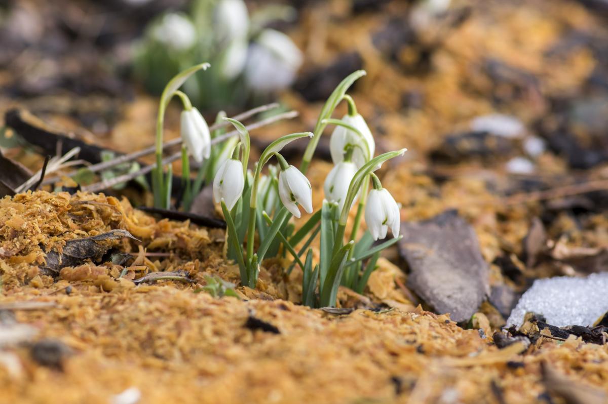Народные приметы и традиции 3 апреля / фото ua.depositphotos.com
