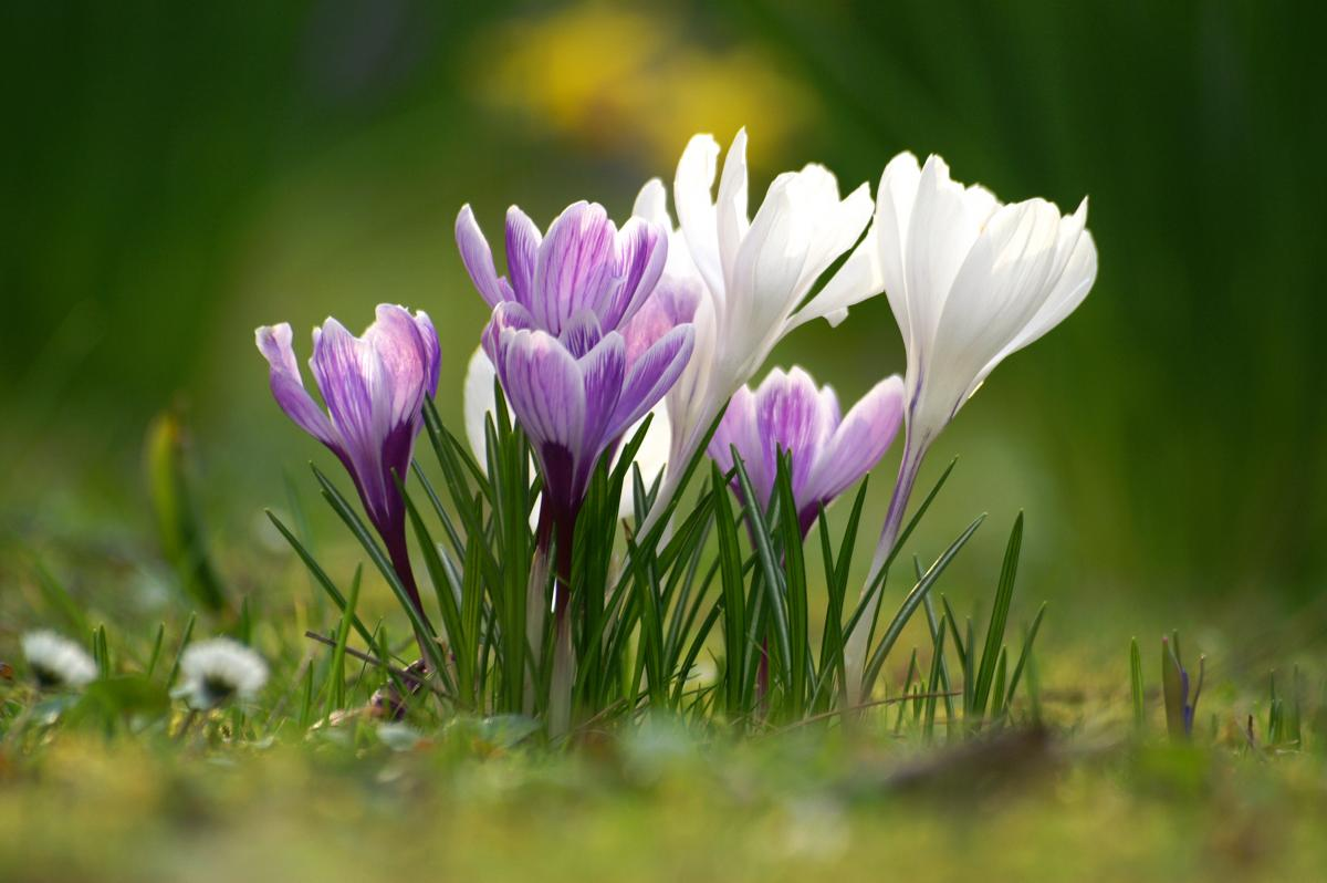 Сегодня в Украине - настоящая весна / Фото ua.depositphotos.com