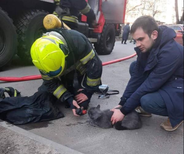 Кота, который надышался дымом, откачали на улице / фото ГСЧС