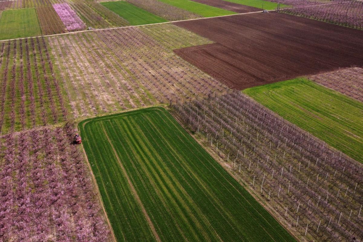 Персиковые поля в Греции / фото REUTERS