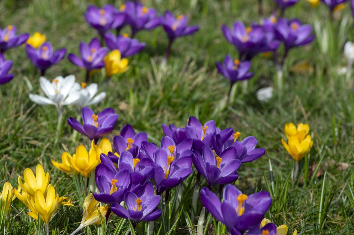 На этой неделе в Украине по-настоящему потеплеет / Фото ua.depositphotos.com