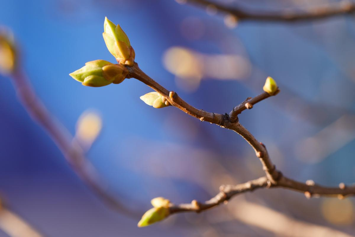 Сегодня в Украине выглянет солнце / Фото ua.depositphotos.com