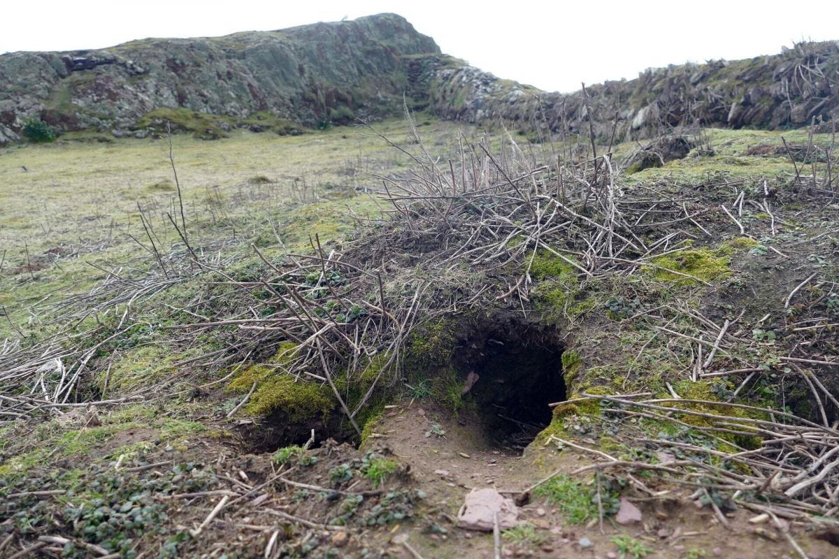 Артефактыобнаружилив куче грунта, выброшенного кроликами из норы/ фото Richard Brown and Giselle Eagle, WTSWW