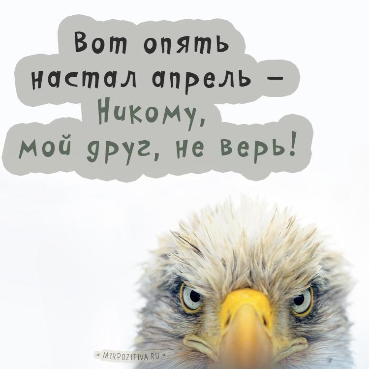С 1 апреля прикольные картинки / фото mirpozitiva.ru
