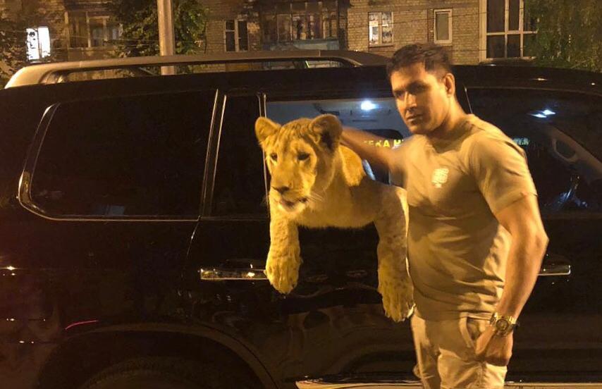 Саид Джавид со своим львом / фото instagram.com/0001_im