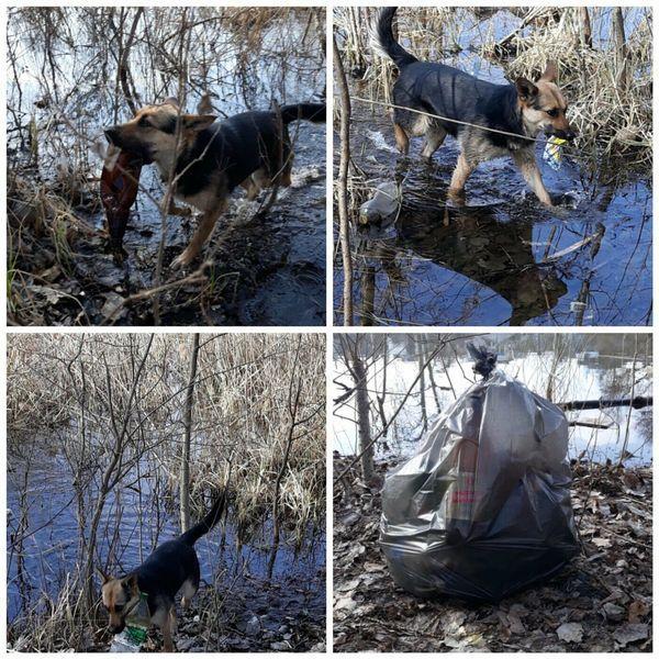 Пес достает мусор из реки / фото facebook.com/groups/everydaysumy