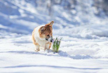 Синоптик розповіла, які області завтра засипле снігом