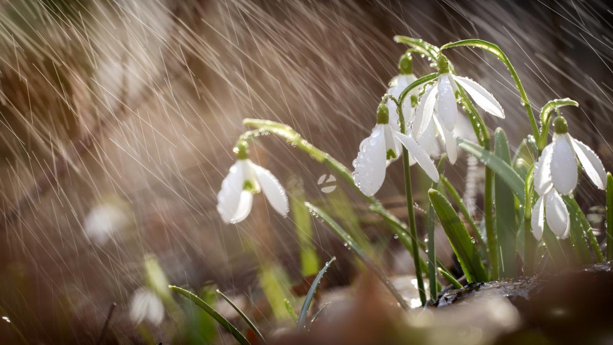В воскресенье Украину вновь накроют дожди / Фото ua.depositphotos.com