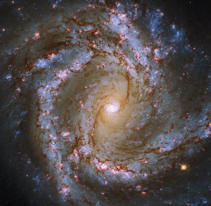 Эта великолепная галактика находится в 52 млн световых лет от Земли / фото ESA/Hubble & NASA, ESO, J. Lee and the PHANGS-HST Team