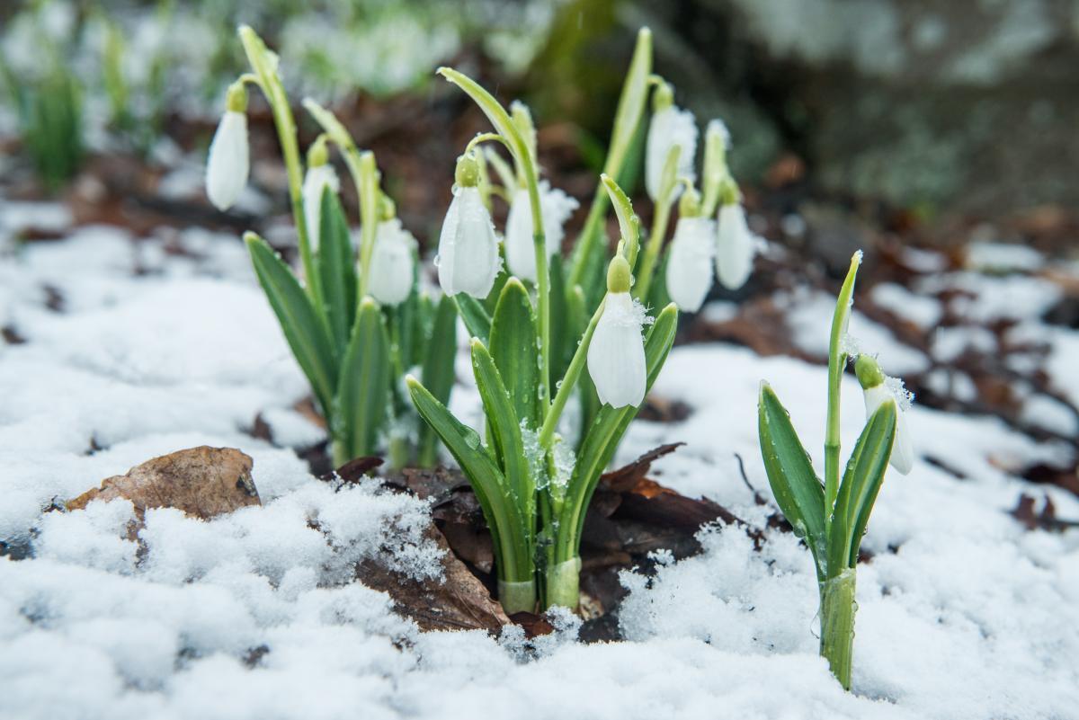 В западных регионах ожидается снег / фото УНИАН
