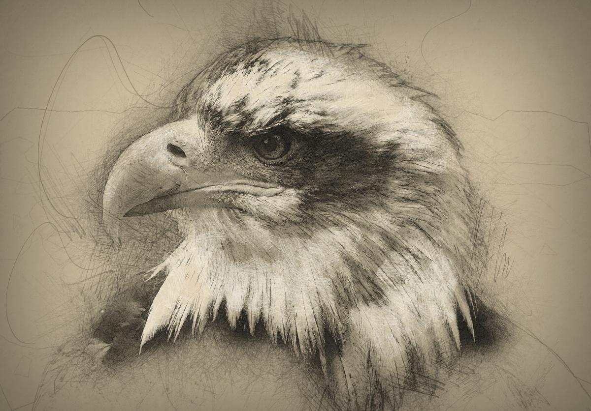 8 квітня - День малювання птахів / фото pixabay.com