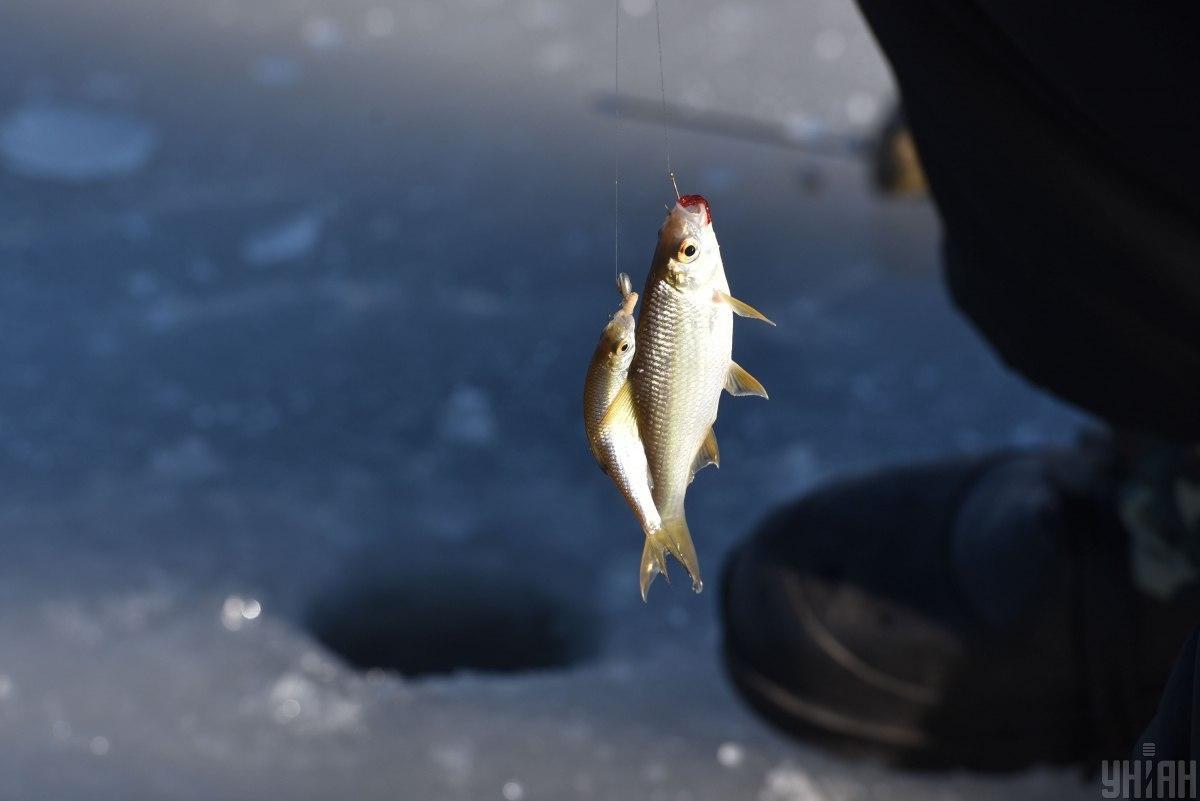 Разрешена любительская рыбалка с берега одной удочкой или спиннингом с максимальным уловом до 3 кг рыбы за сутки / Фото УНИАН, Александр Прилепа