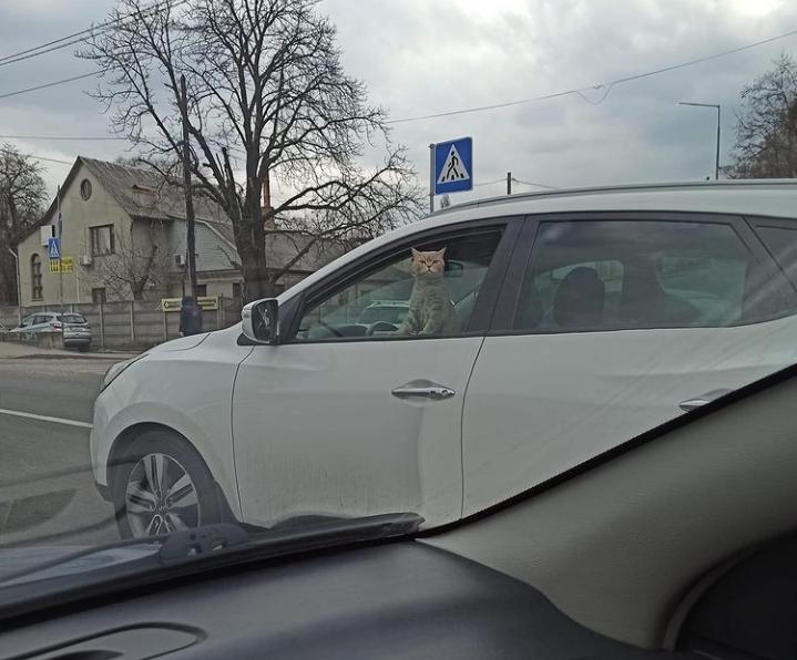 В Киеве сделали забавный снимок с котом / Instagram, lossolomas.kyiv