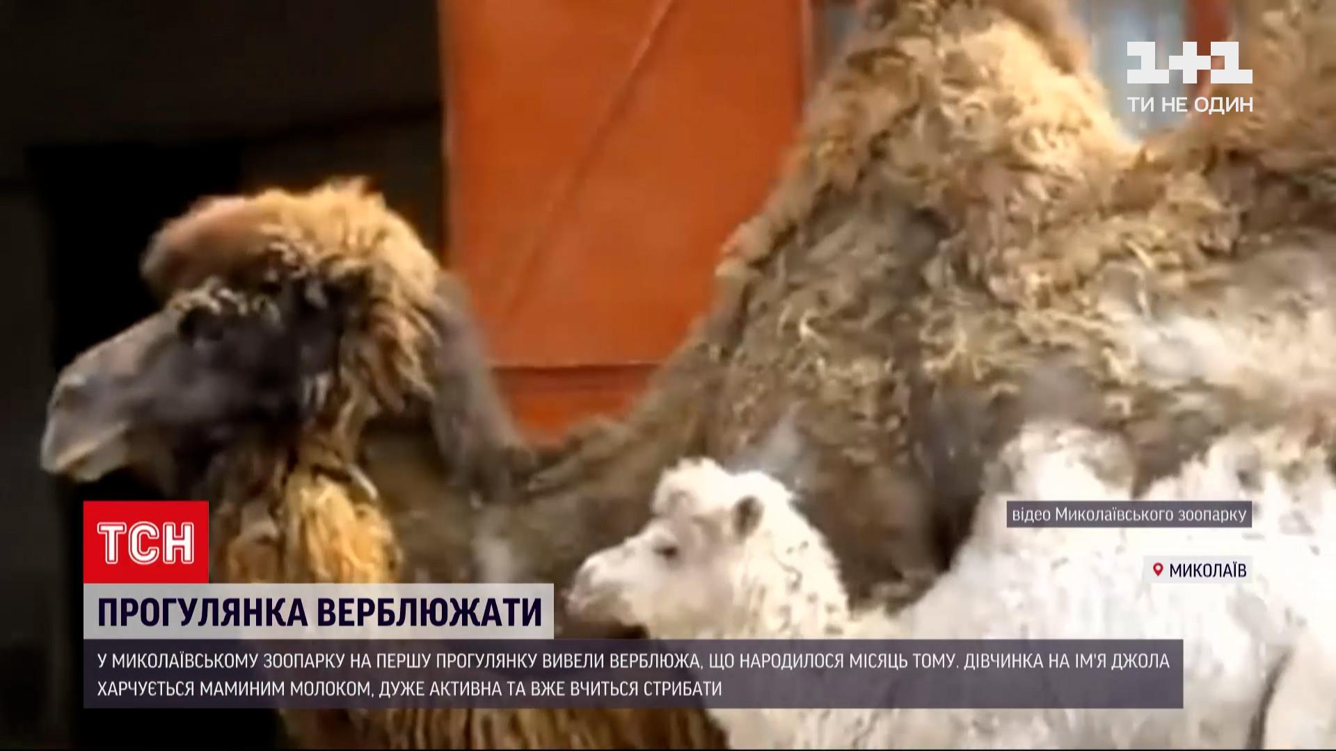 Кадрами поделились работники зверинца / скриншот извидео