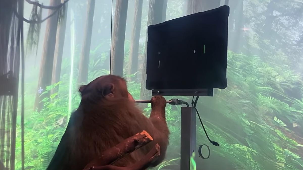 Девятилетняя макака Пейдж играет в Pong силой мысли /скриншот