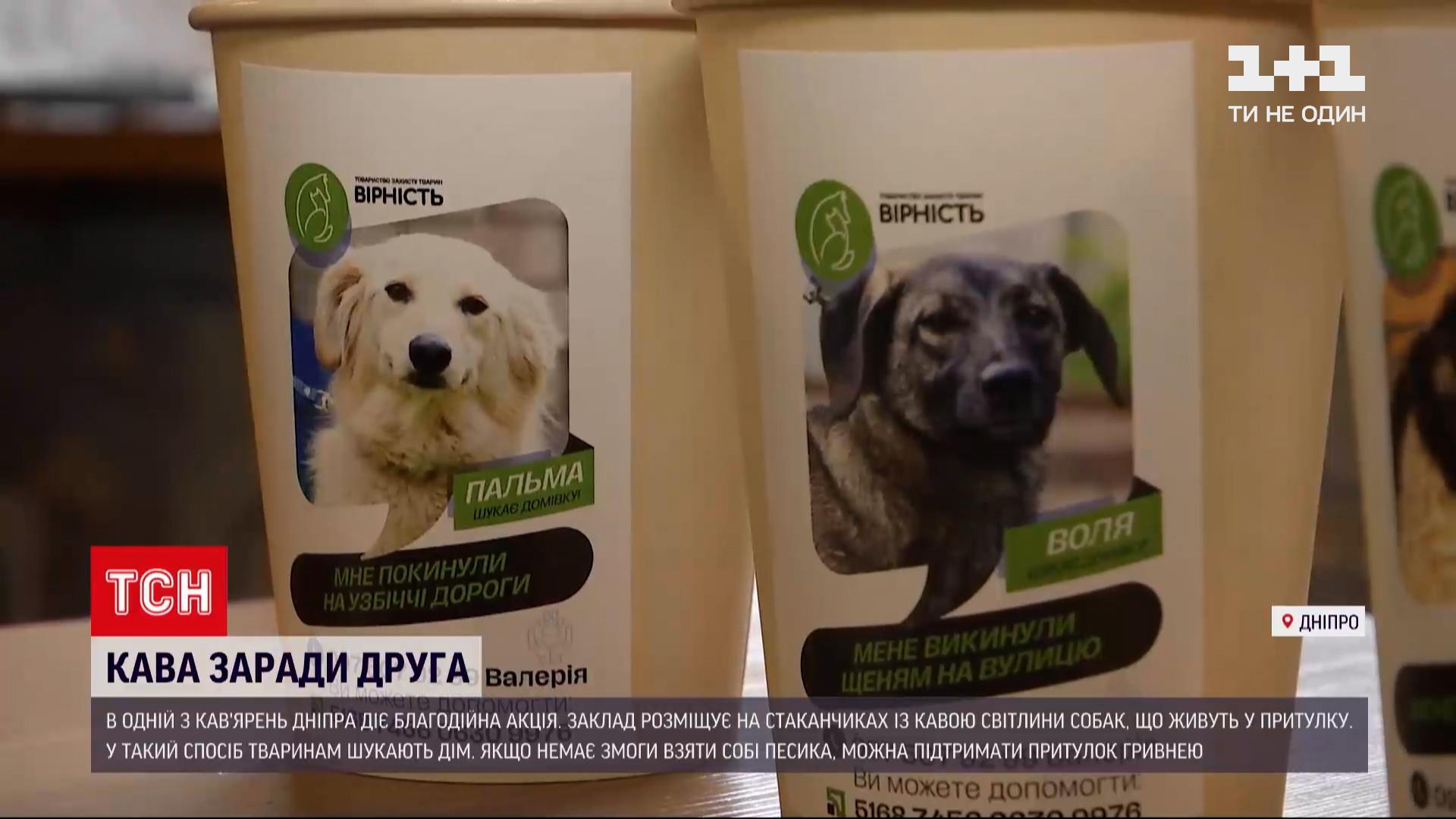 На одноразовые стаканчики клеят наклейки с фотографиями собак / скриншот извидео