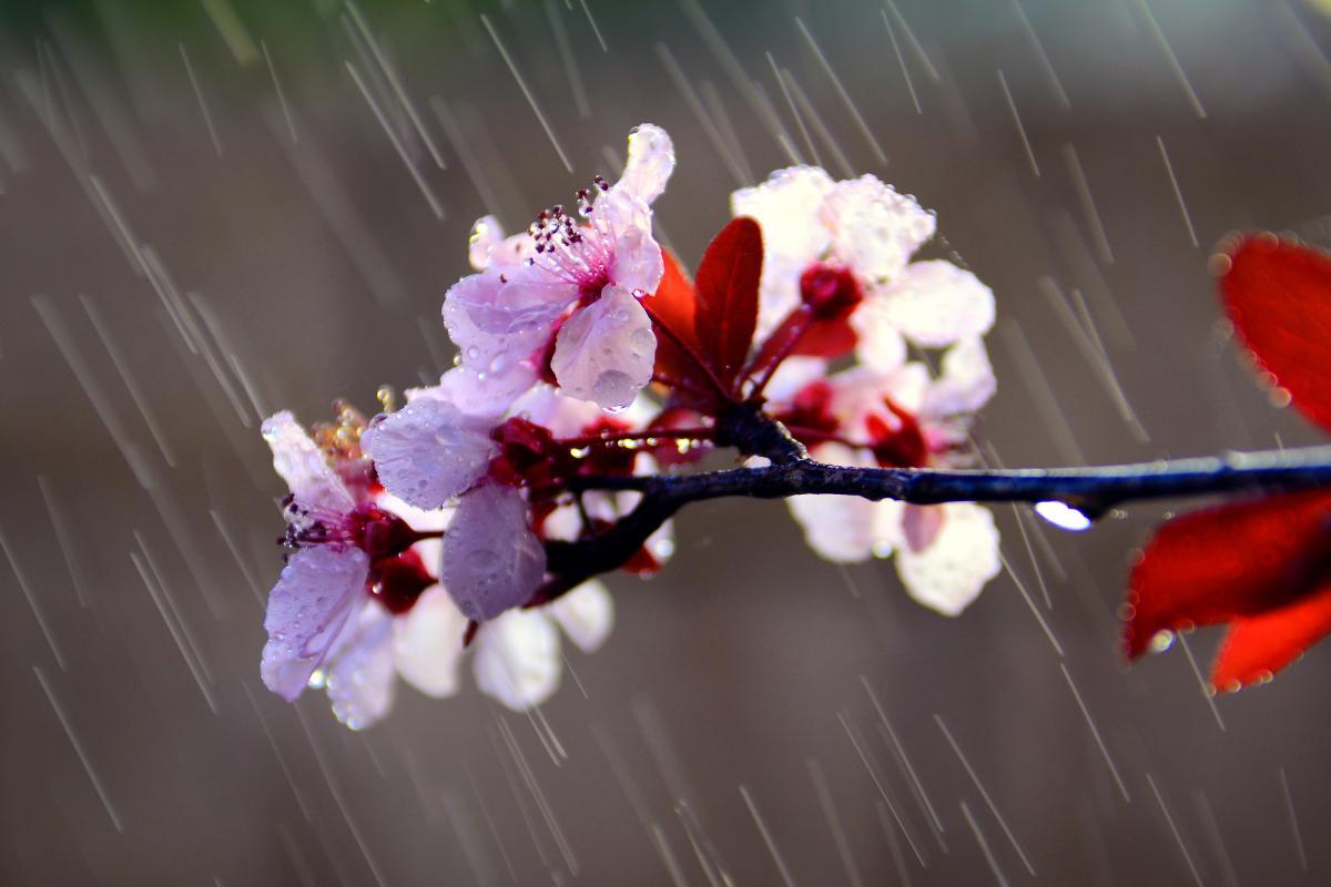 В Україну повернуться дощі / Фото ua.depositphotos.com