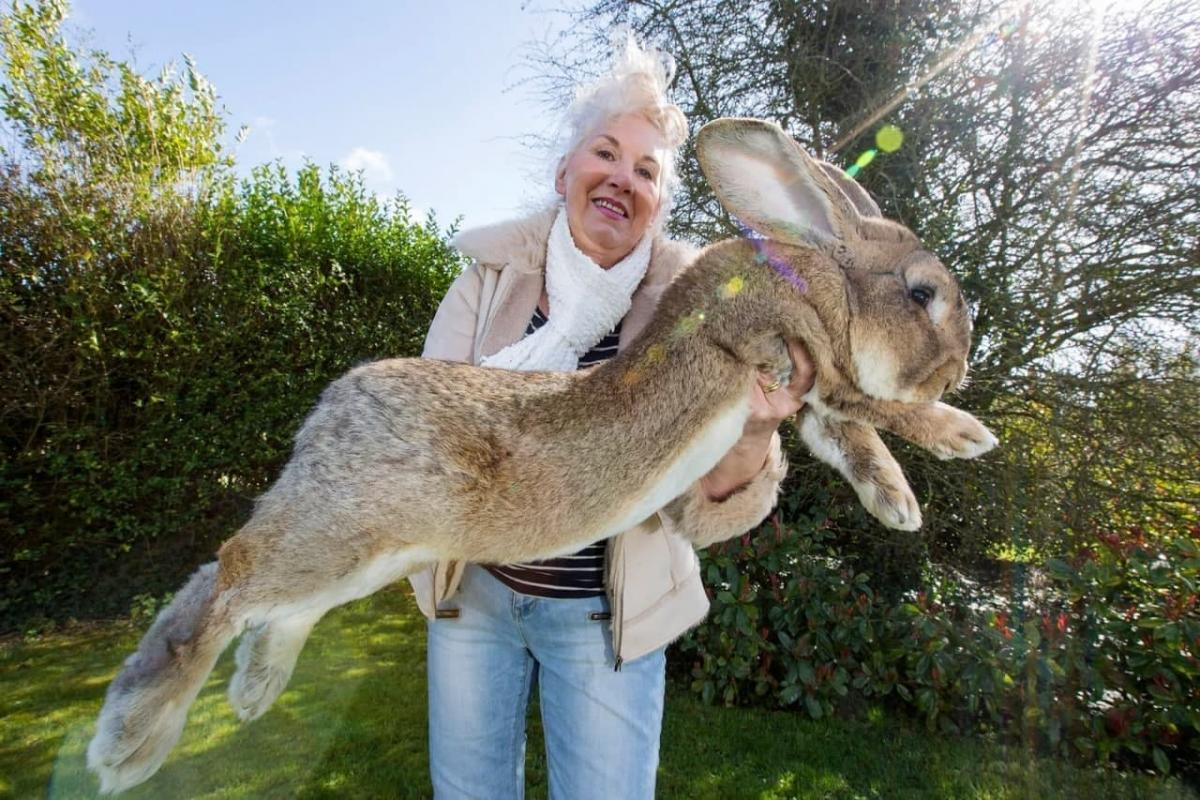 Аннетт Эдвардс с кроликом / фото animalworld