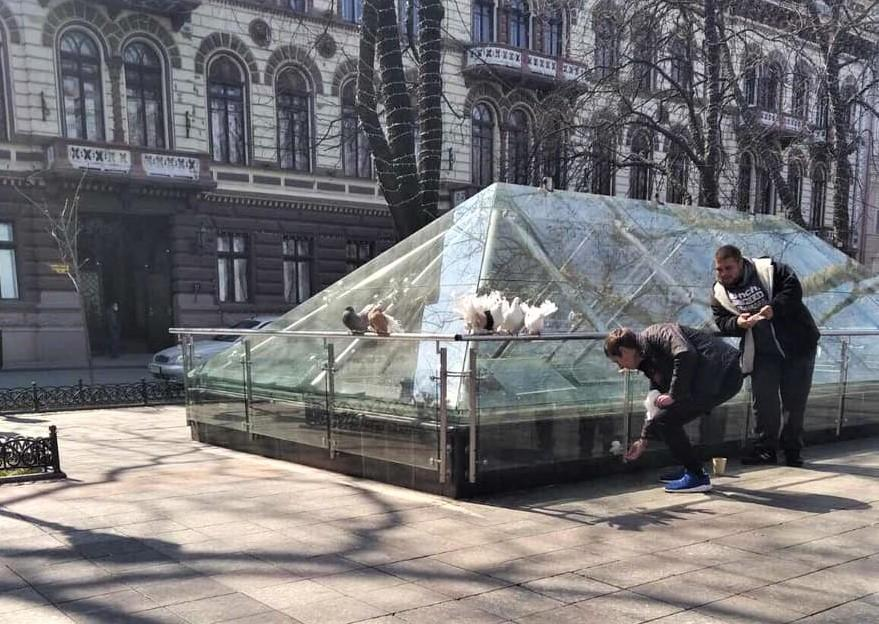 Маховые перья у птиц умышленного скрепляли клейкой лентой / фото facebook.com/ecologyomr