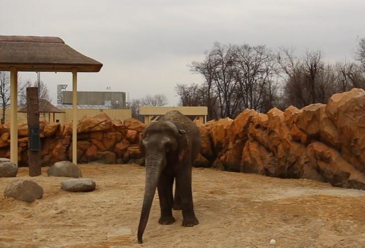 Слоны в Харьковском зоопарке / скриншот с видео