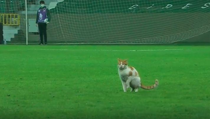 Кіт вибіг на поле / фрагмент з відео