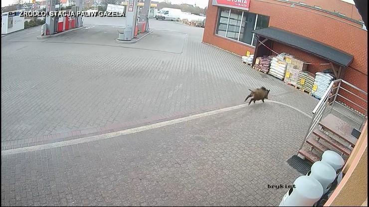 Чому тварина забігла до туалету, невідомо/ скріншот