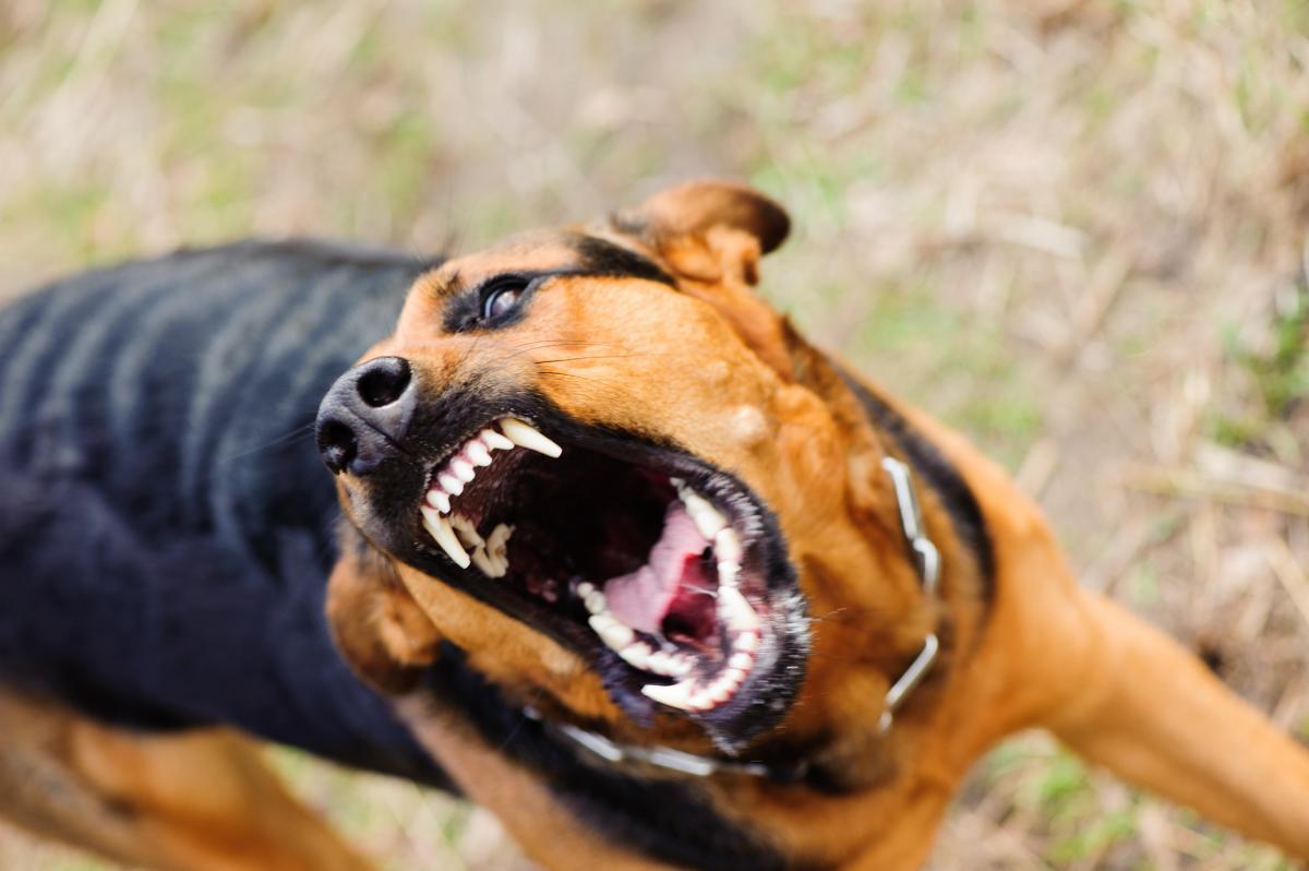 На Полтавщине собака напала на девочку/ фото ua.depositphotos.com