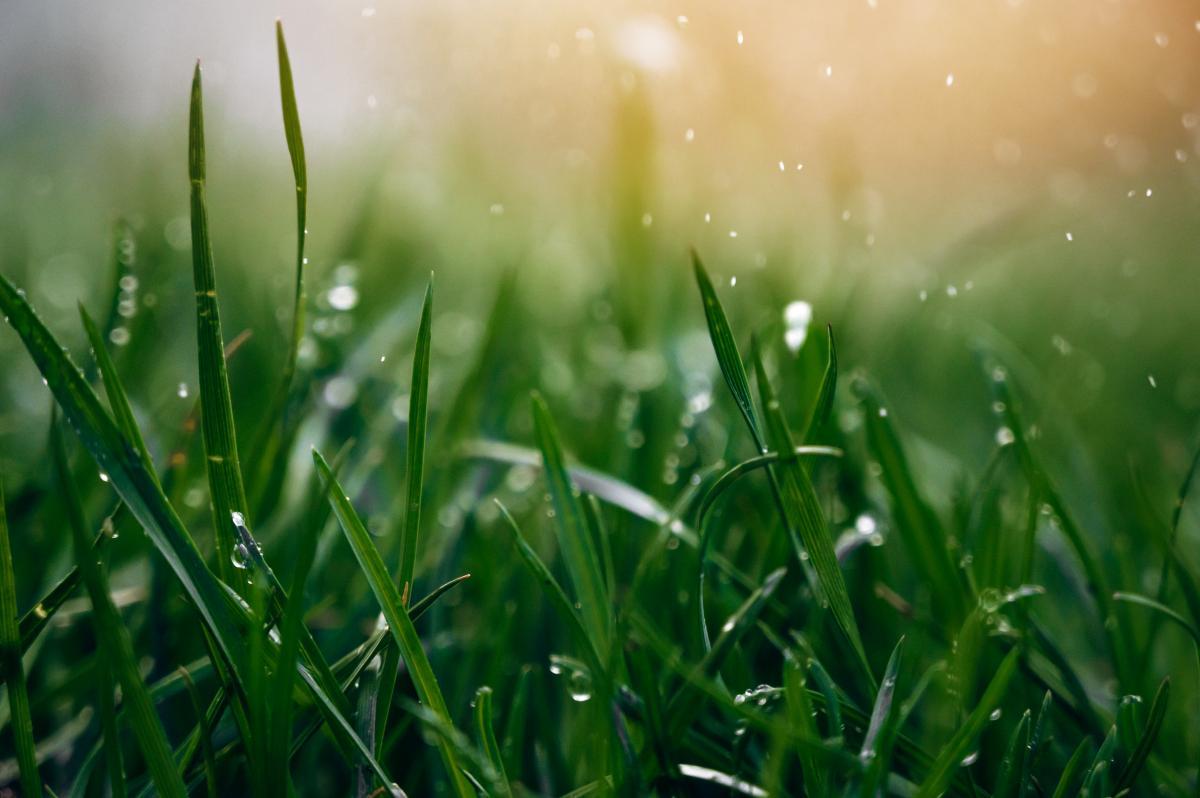 Прийдешній тиждень в Україні буде теплим і дощовим / Фото ua.depositphotos.com