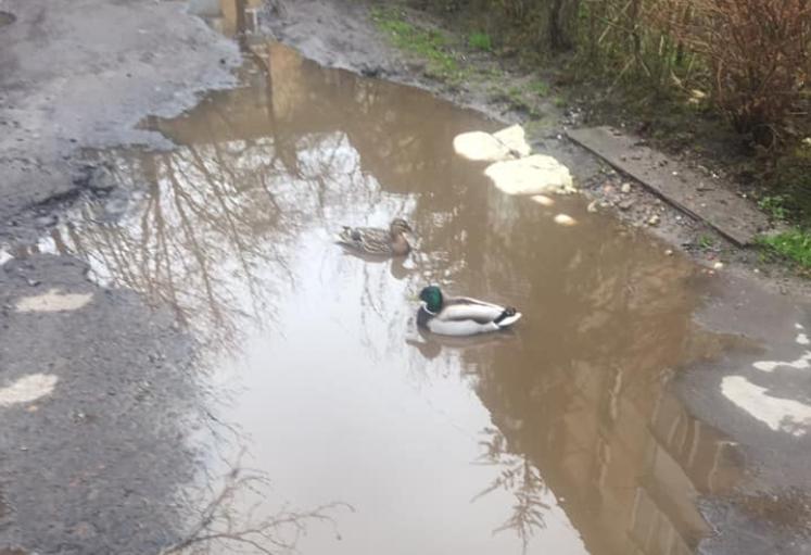 Обычная улица во Львове превратилась в пруд / Facebook