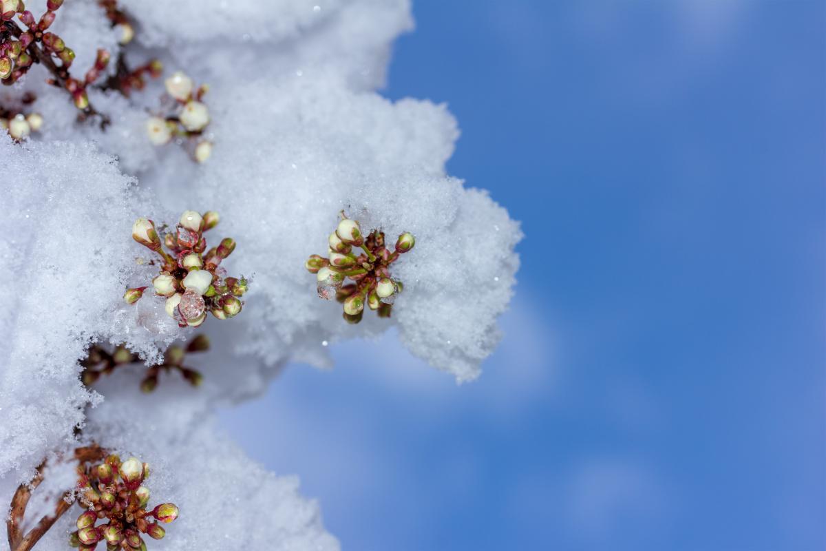 В конце недели возможен снег / фото УНИАН