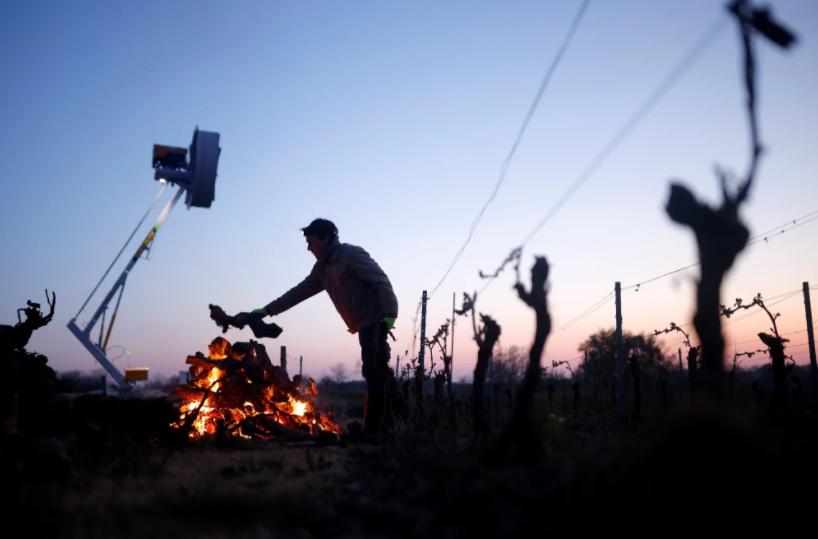 Заморозки затронули 80% виноградников страны / Иллюстрация Reuters