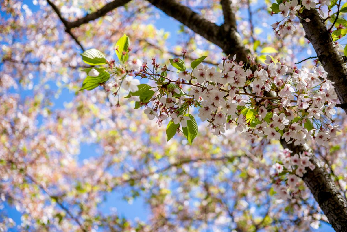 Завтра в Украине ожидается потепление / Фото ua.depositphotos.com