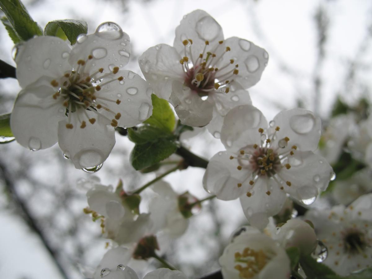 В мае будут идти дожди / Фото ua.depositphotos.com