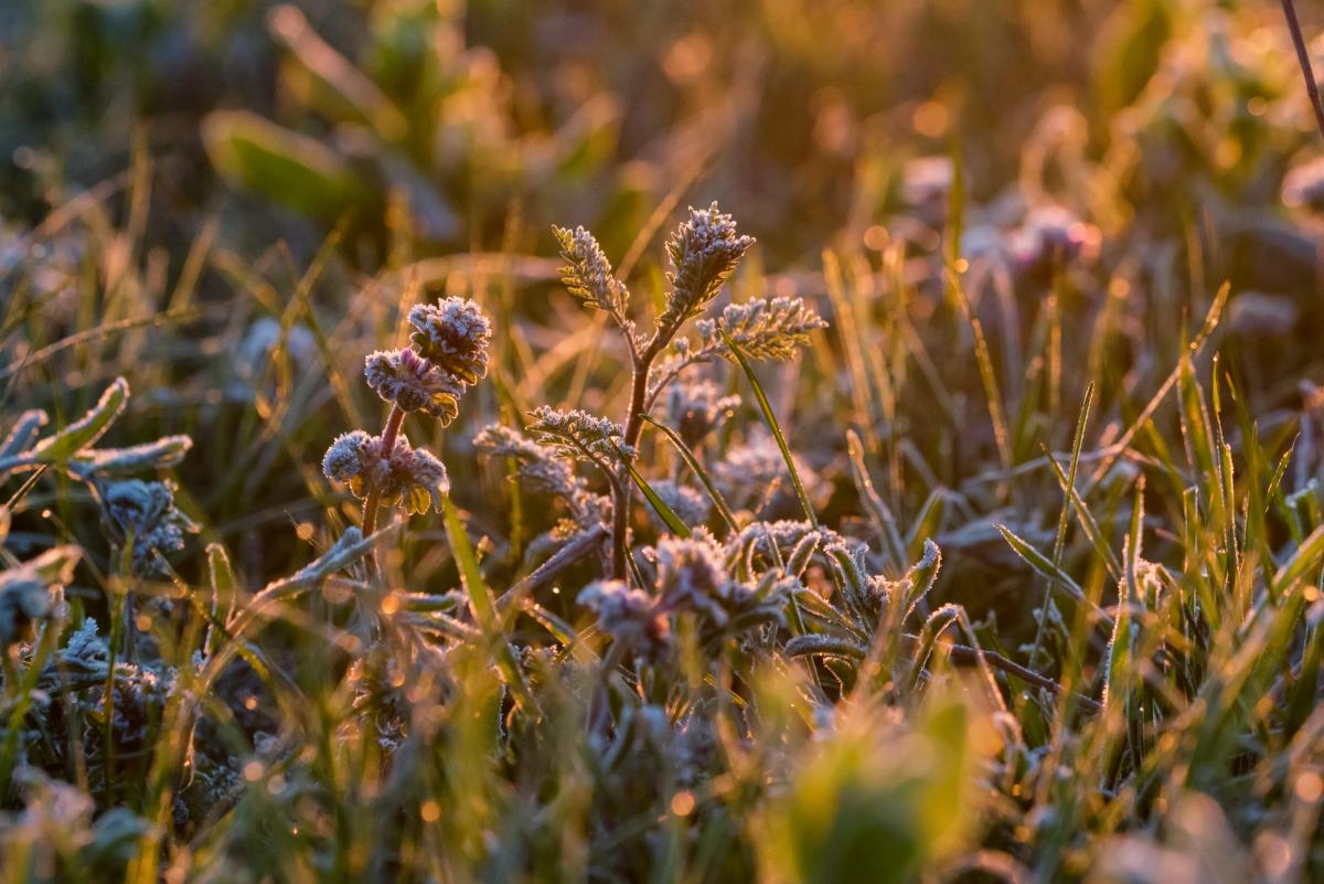 На западе Украины ожидаются сильные заморозки в воздухе 0-3° \ Фото ua.depositphotos.com