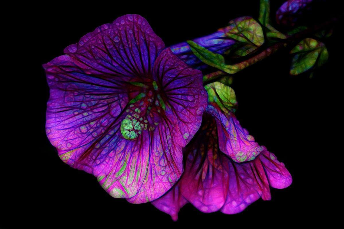 27 квітня - Всесвітній день графічного дизайну / фото pixabay.com