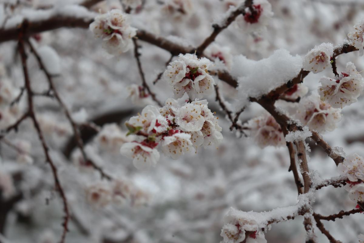 Завтра страну может засыпать снегом / Фото ua.depositphotos.com
