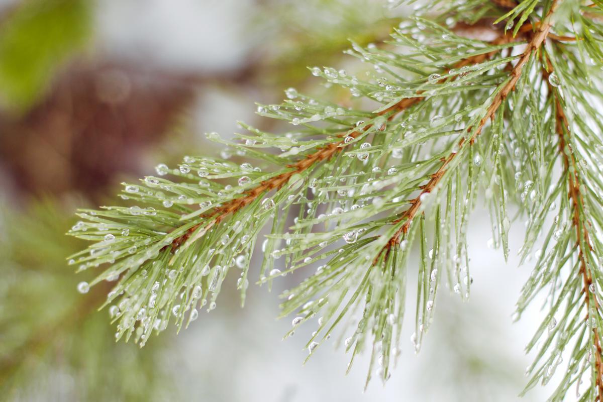 Завтра у столиці можливі опади / Фото ua.depositphotos.com