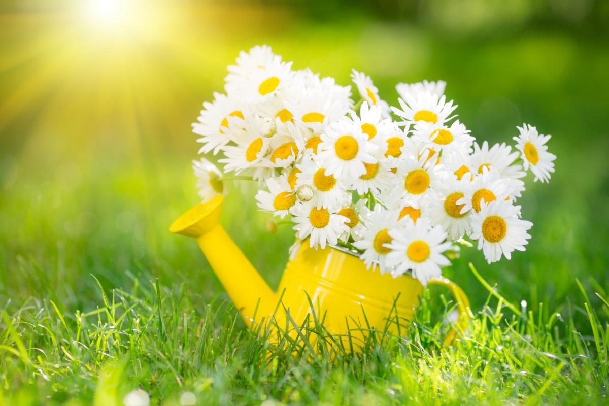 Завтра в Україні очікується тепла та суха погода / фото ua.depositphotos.com