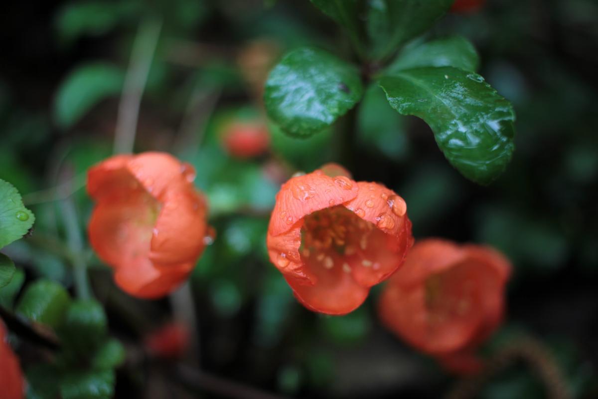 Начало мая будет прохладным / Фото ua.depositphotos.com