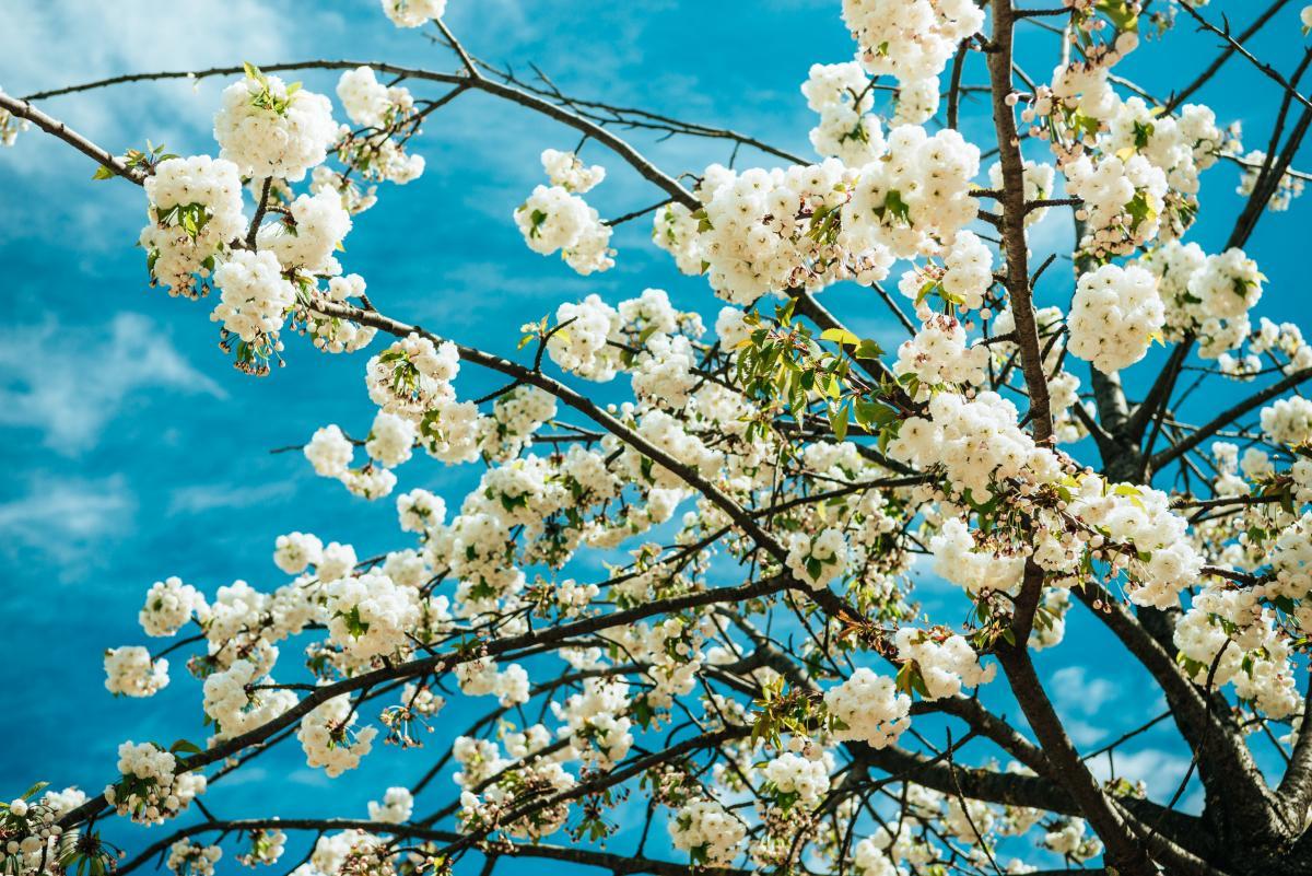 Сегодня в Киеве будет теплая погода / Фото ua.depositphotos.com