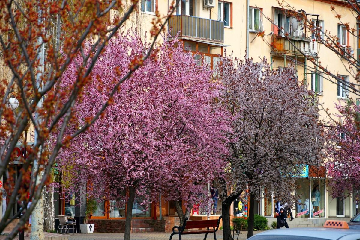 Ужгород з приходом весни розквітнув / Фото: UNIAN