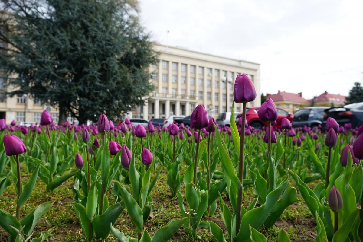 Площа Народна в Ужгороді / Фото Ужгородської міської ради