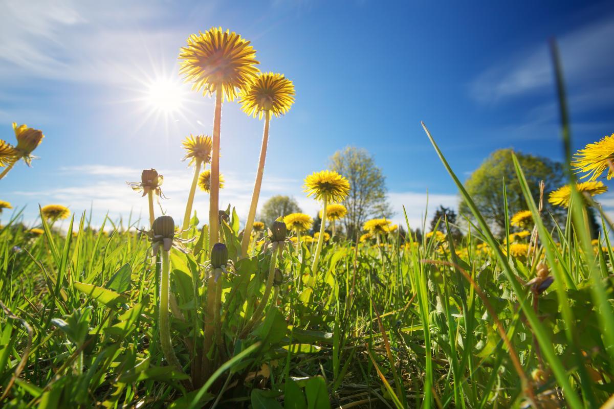 В Украинуидет теплая погода / Фото ua.depositphotos.com