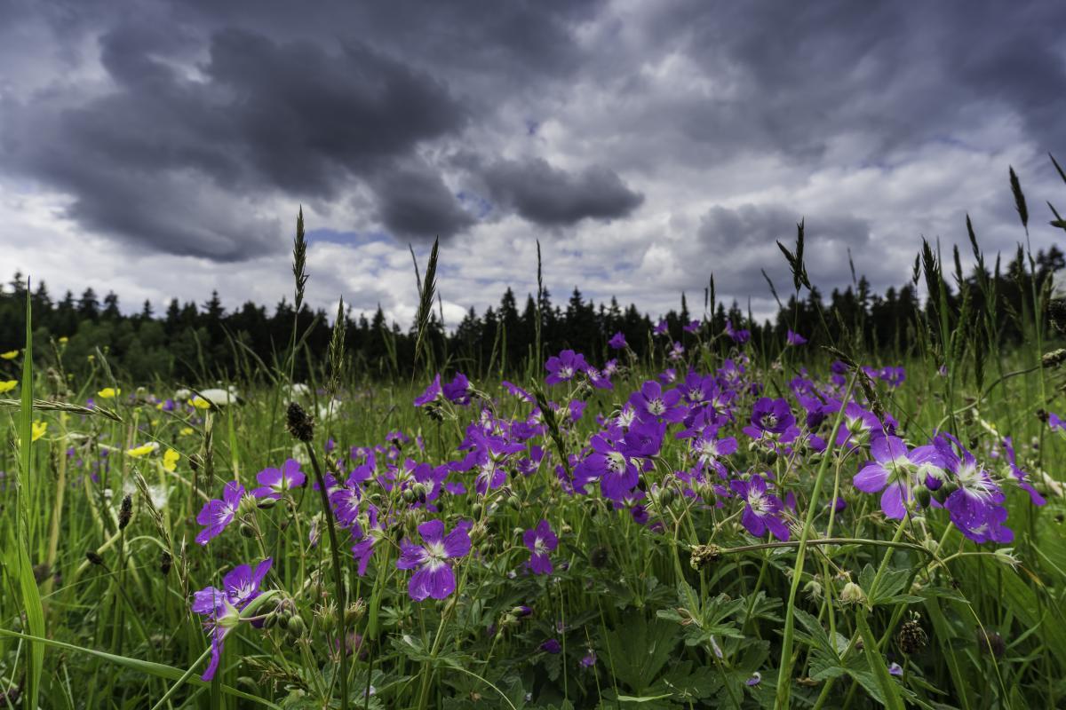 3 травня на сході України пройдуть дощі з грозами / Фото ua.depositphotos.com