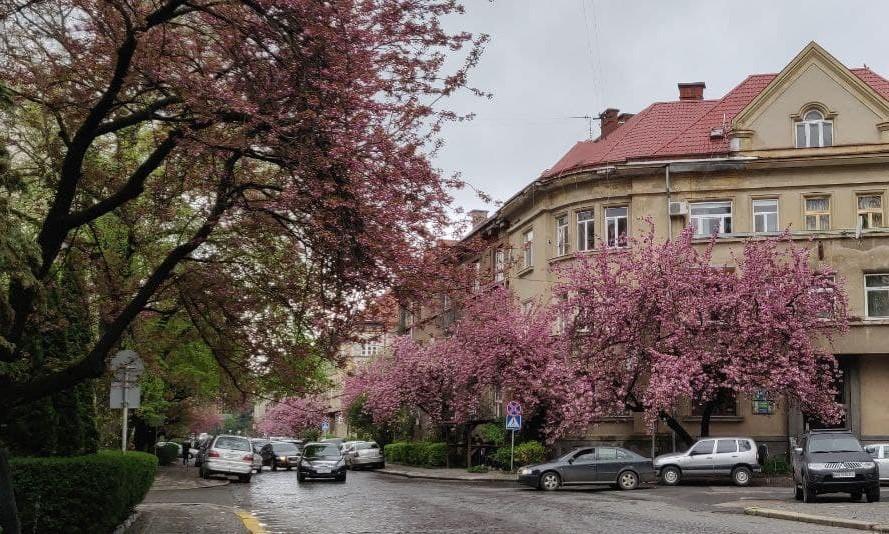 Из-за непогоды деревья начали цвести несколько позже, чем ожидалось / фото УНИАН