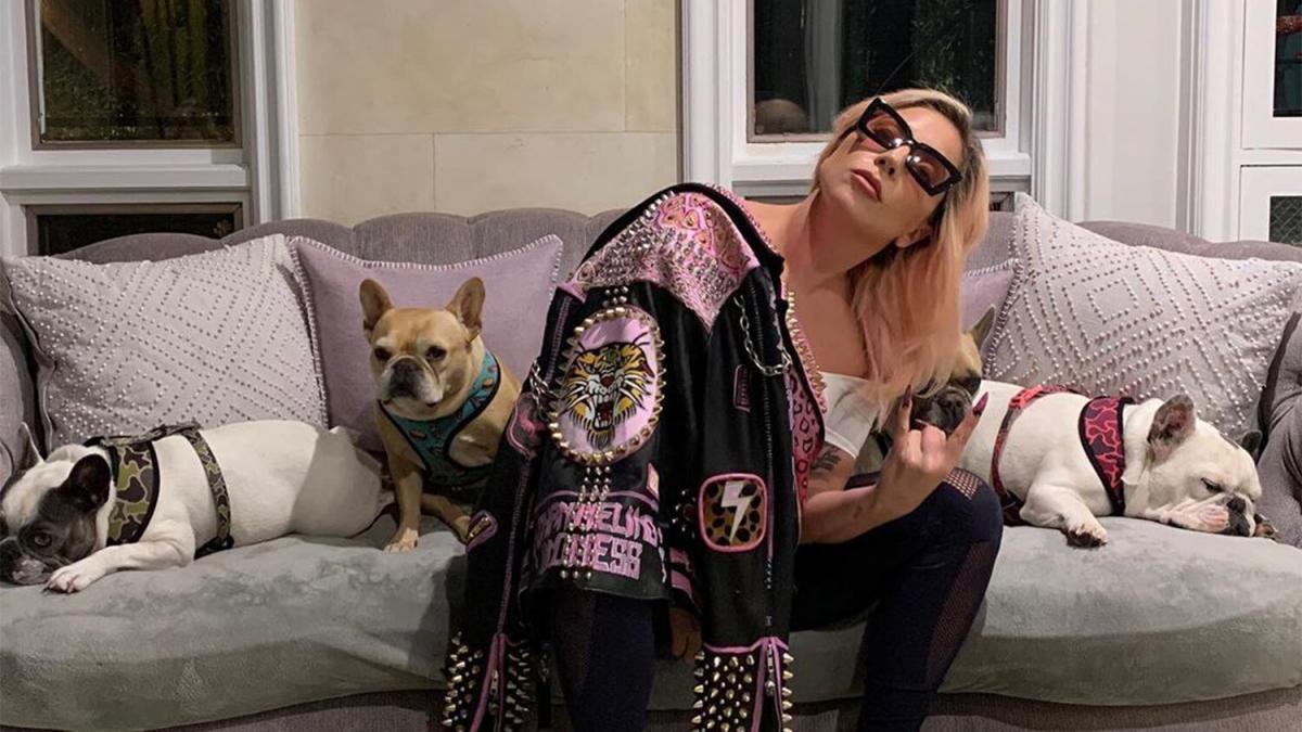 Ранее Гага предлагала вознаграждение тому, кто поможет вернуть животных / фото Instagram Lady Gaga