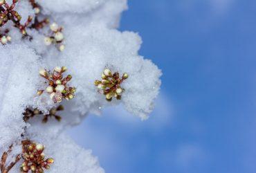 Снег в конце апреля: синоптик рассказала о новом похолодании в Украине