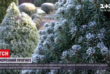 Синоптики прогнозируют заморозки до -5